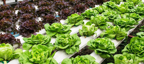Adapting to Adaptation: A Roadmap to How We Will Live in 2050 | Aquaponics in Action | Scoop.it