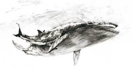 Antiguo mordisco de tiburón conservado e...