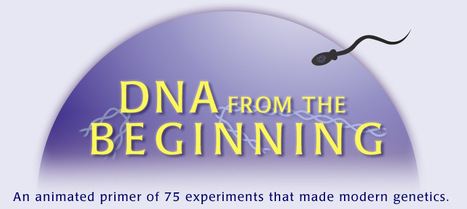 DNA from the Beginning - An animated primer of 75 experiments that made modern genetics. | Teaching High School Genetics | Scoop.it