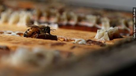 To save bees, some states sting pesticide use - USA TODAY | Nonprofit Organizations | Scoop.it
