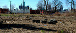 Hantz Farms for-profit urban farm deal to plant trees in Detroit may be near | Vertical Farm - Food Factory | Scoop.it