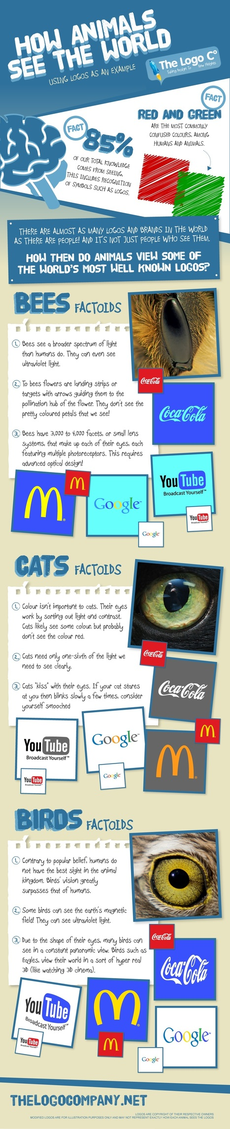 How Animals See the World Using Logos as an Example [Infographic] | Infographics ideas for Education | Scoop.it