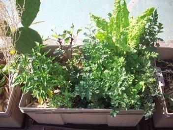 Un huerto en tu casa   Reutilizando   Cultivos Hidropónicos   Scoop.it