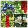 Rassegna stampa mirtilli e piccoli frutti