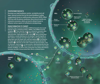 Exosomes - History and Promise | NetBiology | Scoop.it