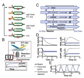 Implementation of cell-free biological networks at steady state | SynBioFromLeukipposInstitute | Scoop.it