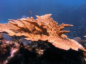 About Caribbean Coral Reefs | Belize in Social Media | Scoop.it