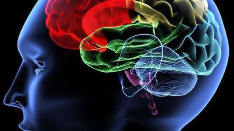 Sept idées reçues sur le cerveau qui limitent votre efficacité | Fonctionnement du cerveau & états de conscience avancés | Scoop.it