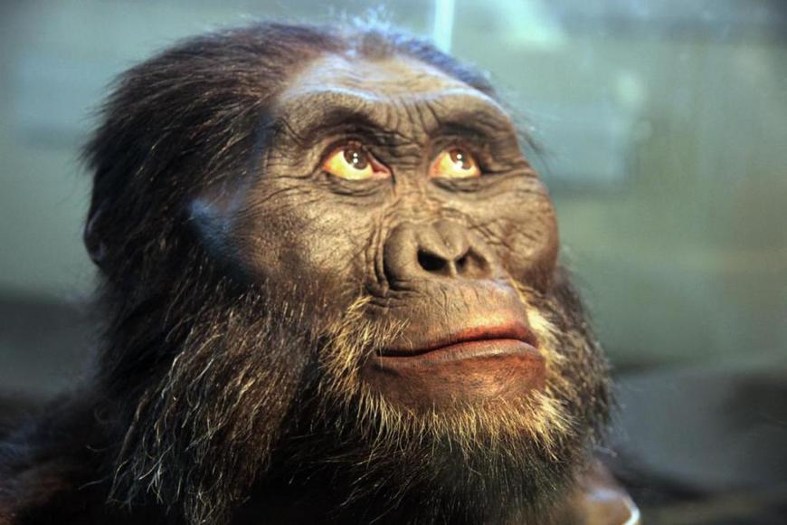 La importancia de enseñar la evoluci&oac...