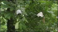3,000 Pair of Panties Found Along Ohio Highway   Xposed   Scoop.it