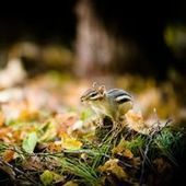 20 Charming Pictures of Ground Squirrels and Chipmunks | Jaclen 's photographie | Scoop.it
