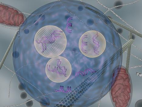 Enhancing RNA interference | Biosciencia News | Scoop.it