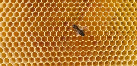 Pourquoi les abeilles disparaissent | décroissance | Scoop.it