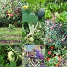 Bosques comestibles - Noticias Positivas | Cultivos Hidropónicos | Scoop.it