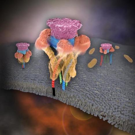 Long-standing mystery in membrane traffic finally solved | Amazing Science | Scoop.it