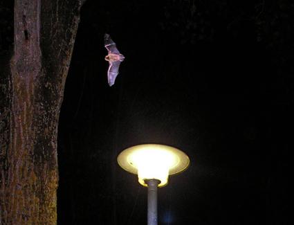 Efficacité de l'extinction nocturne de l'éclairage public sur la biodiversité | Mes passions natures | Scoop.it