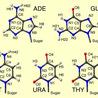SWHS Biomolecules