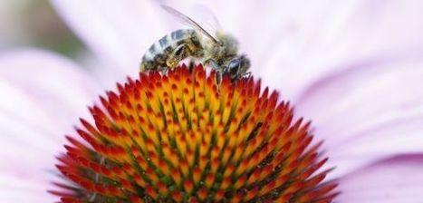 Hacia un mundo sin abejas | Sabiduría Emociones y Más | Scoop.it