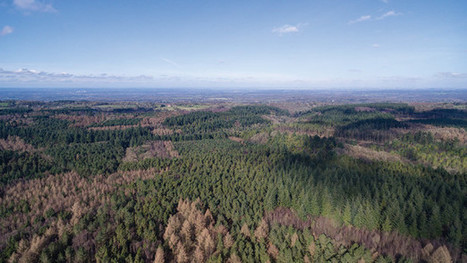 Value of productive forestry land jumped 13.5% in 2015   Timberland Investment   Scoop.it