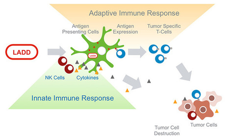 Aduro Biotech' in Cancer Immunotherapy Review and Collection