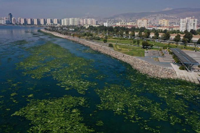 Sea lettuce, fed by pollution, spreads on TURKEY's Aegean coast