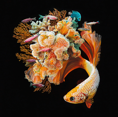 #Hyperrealistic Depictions of #Fish Merged With Their #Coral #Environments by Lisa Ericson. #art | Luby Art | Scoop.it