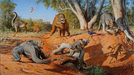 L'extinction d'animaux géants en Australie est due à l'homme | Biodiversité & Relations Homme - Nature - Environnement : Un Scoop.it du Muséum de Toulouse | Scoop.it
