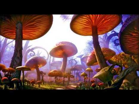 Amentia Music a psychedelic experience | Electronic Dance Music (EDM) | Scoop.it