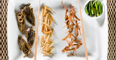 Insects: Nutritious, but Delicious? / Nutrition - FitDay | eating insects = win | Scoop.it