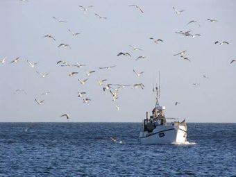 European Union pressures Denmark to protect reefs | everett ce marine biology | Scoop.it