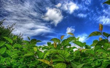 CONACYT da a conocer iniciativa de energía renovable: fotosíntesis artificial | energía tibt | Scoop.it
