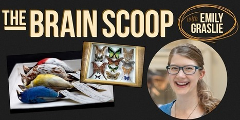 Blogs & Videos: The Brain Scoop | STEM Education models and innovations with Gaming | Scoop.it