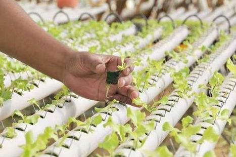 los cultivos sin suelo bolivia