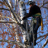 C&C Tree Service