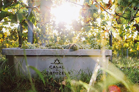 Vinho Verde, all you need to know! | Wine Liquid Lisbon | Scoop.it