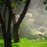 Landscaping Jire