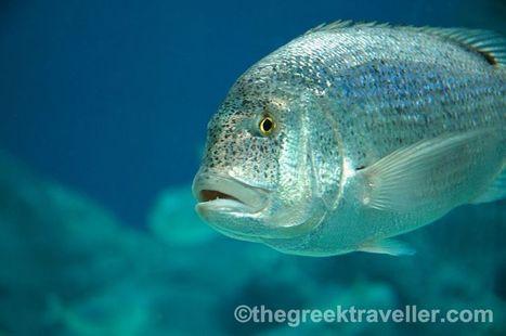 Oh, how I love the sea bottom… The Cretaquarium. | travelling 2 Greece | Scoop.it
