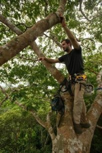 Ant bridges connect shy tropical tree crowns: Ant biodiversity study confirms basic island biogeography principles | Rainforest EXPLORER:  News & Notes | Scoop.it