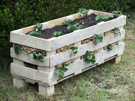 New Video Tutorial: How to Make a Strawberry Pallet Planter ~ Lovely Greens | The Beauty of Country Living | Garden Ideas by Team Pendley | Scoop.it