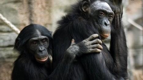 Die Kollegen ruhig mal lausen: Was wir von Affen fürs Büro lernen können - FAZ - Frankfurter Allgemeine Zeitung   Job und Karriere   Scoop.it