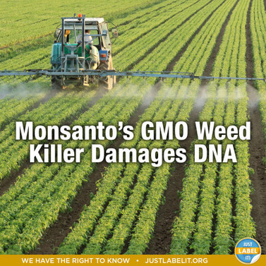 #Monsanto's #GMO Weed Killer #Roundup Damages #DNA | Just Label It | Messenger for mother Earth | Scoop.it