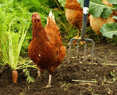 Activist Post: Building Communities From the Food Up | Vertical Farm - Food Factory | Scoop.it