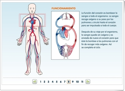 El sistema circulatorio\