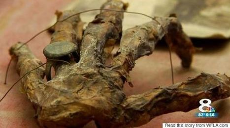 """Old Hand Found In Florida Attic With Coins And Treasure Map 