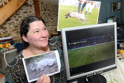 Stade Rennais. Le chat qui a traversé le stade est-il celui de Morgane? - Rennes - Animaux - ouest-france.fr | Les chats c'est pas que des connards | Scoop.it