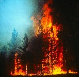 Wildfire Readiness for Horses andLivestock | Carriage Driving Radio Show | Scoop.it
