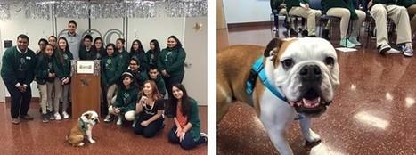 Oakland TLC Program Teaches At-Risk Kids Empathy Toward Animals | Empathy and Animals | Scoop.it