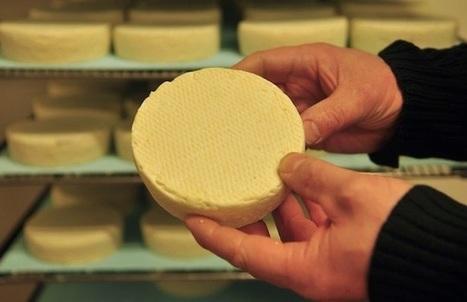 L'AOP Munster partagée entre les exigences des producteurs fermiers et des gros transformateurs | The Voice of Cheese | Scoop.it