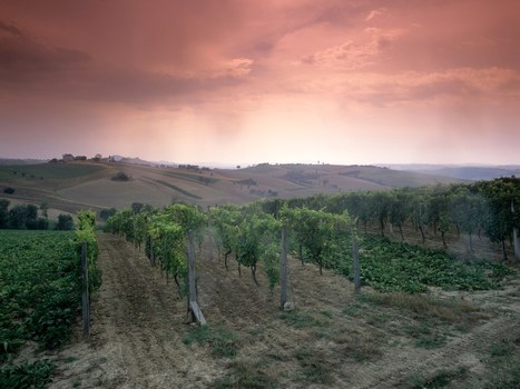 Le Marche among The Italian Wine Regions You Should Visit Next by Condé Nast Traveler | Wines and People | Scoop.it