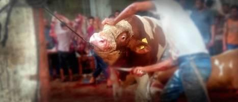 Baby animal trade fuels horrific cruelty   Nature Animals humankind   Scoop.it